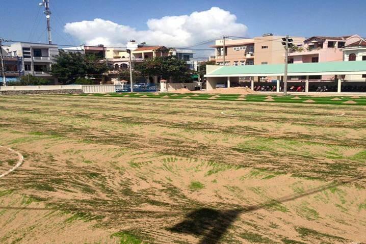 quy trình thay cỏ mới sân bóng cũ