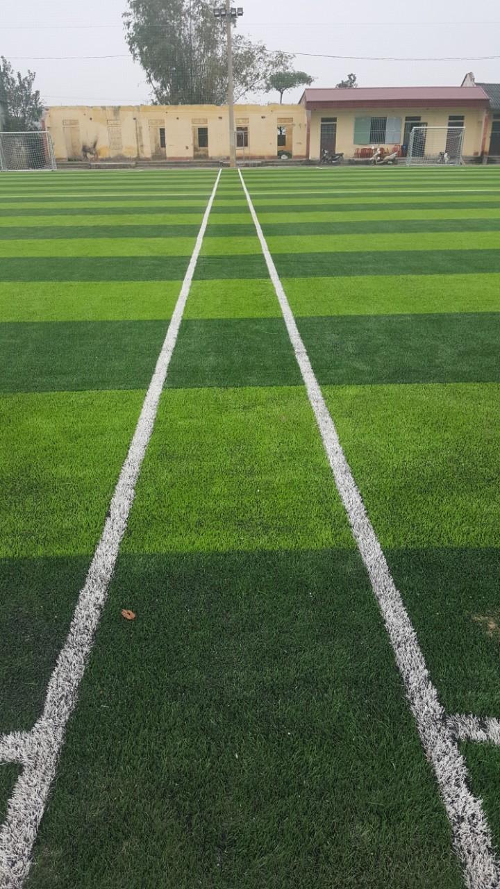 quy trình thay cỏ sân mới sân bóng cũ