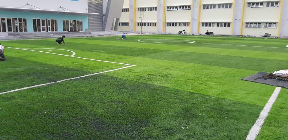 cỏ sân bóng long biên
