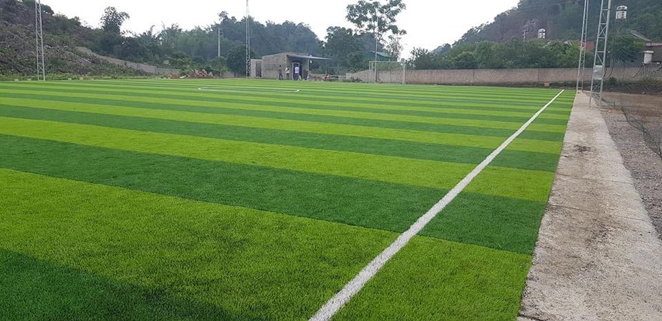 cỏ sân bóng